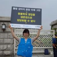 불법 강아지 공장 철폐 1인 시위 현장 [사진그림류]
