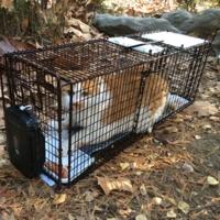 어린이대공원 길고양이 1차 TNR 작업2 : 길고양이 포획 현장 [사진그림류]
