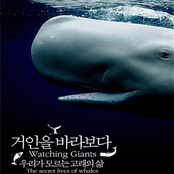 거인을 바라보다 : 우리가 모르는 고래의 삶 [동물도서]