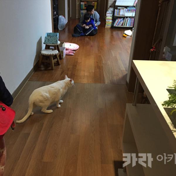 (입양후기-고양이) 터앙 [사진그림류]