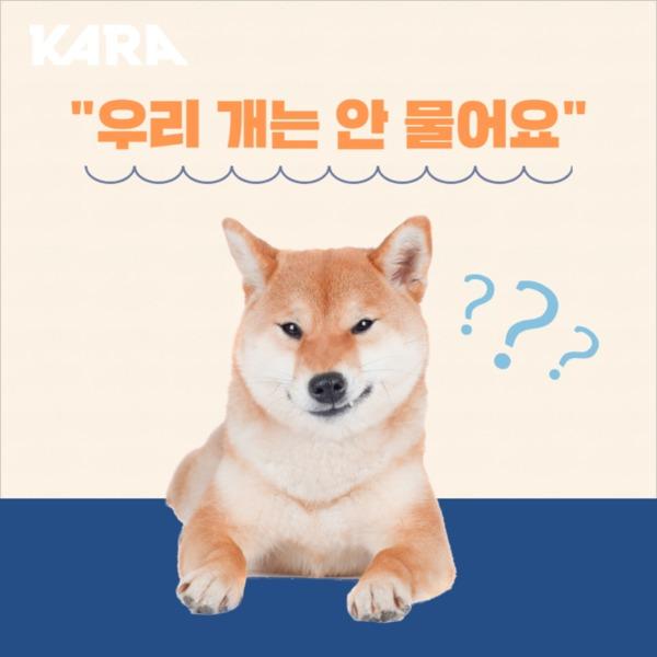 [카드뉴스] 반려동물 행동교육 사회화 기본예절 [사진그림류]