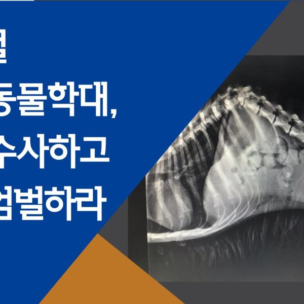 [2019.03.28] 유기견 척추 골절 동물학대 사건 엄정 수사 및 엄벌 촉구 서명 운동
