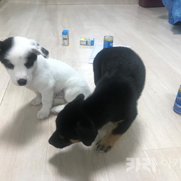 (입양후기-개) 이랑,애9랑 [사진그림류]