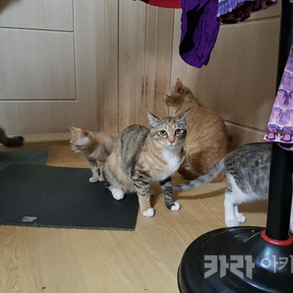안산 고양이 40마리 애니멀호더 [사진그림류]