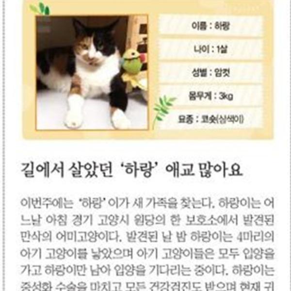 (기사) 파이넨셜뉴스동반자를찾습니다(하랑) [문서류]