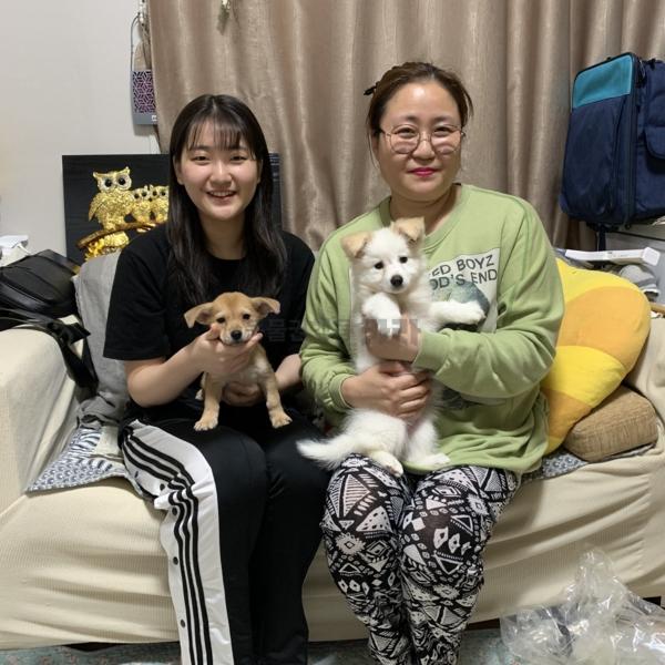 [입양후기사진] 다낭,달콤(개) [사진그림류]