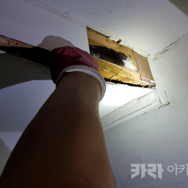 상도동 벽틈 갇힌 길고양이 구조 [사진그림류]
