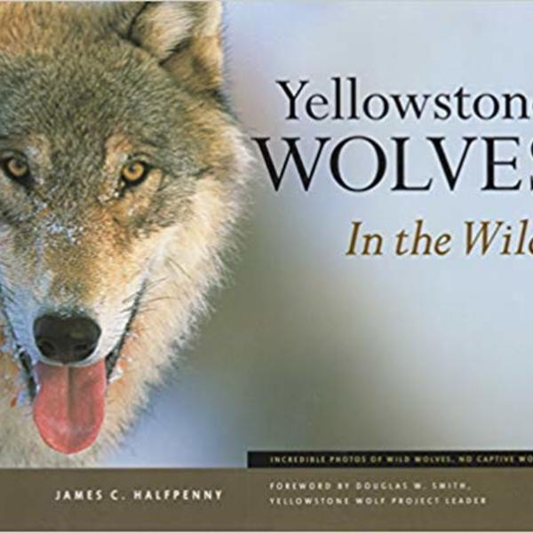 Yellowstone Wolves in the Wild [동물도서]