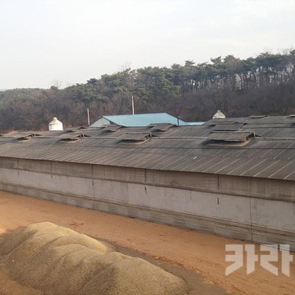 포항 킹스파머스 근처 공장식 축산 농장 [사진그림류]