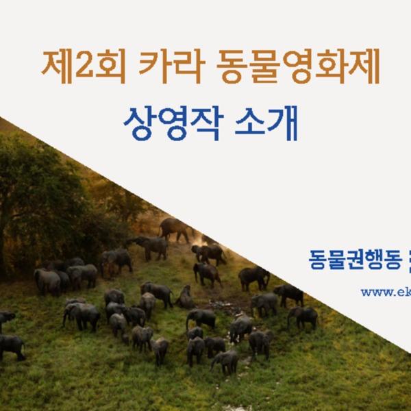 제2회 카라 동물영화제 상영작 소개 [문서류]