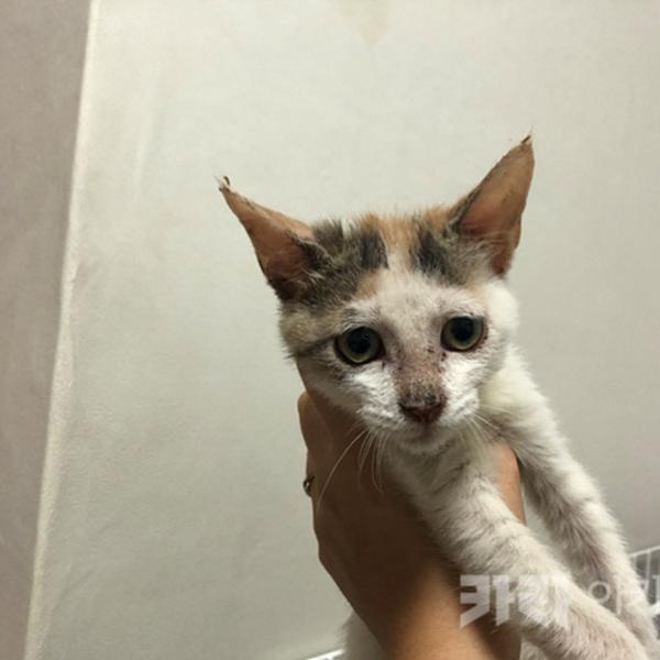 안산 애니멀호더 구조 고양이 개체카드 작업 [사진그림류]