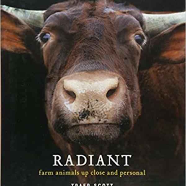 Radiant : Farm Animals Up Close and Personal [동물도서]