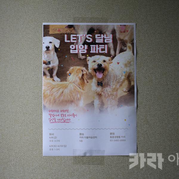 렛츠 봄봄 입양파티 [사진그림류]