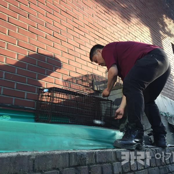 용산 서계동 길고양이 가족 구조 [사진그림류]