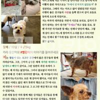 2015 찾아가는 동물보호교육 : 한양대학교사범대학부속고등학교 제작 포스터 [사진그림류]