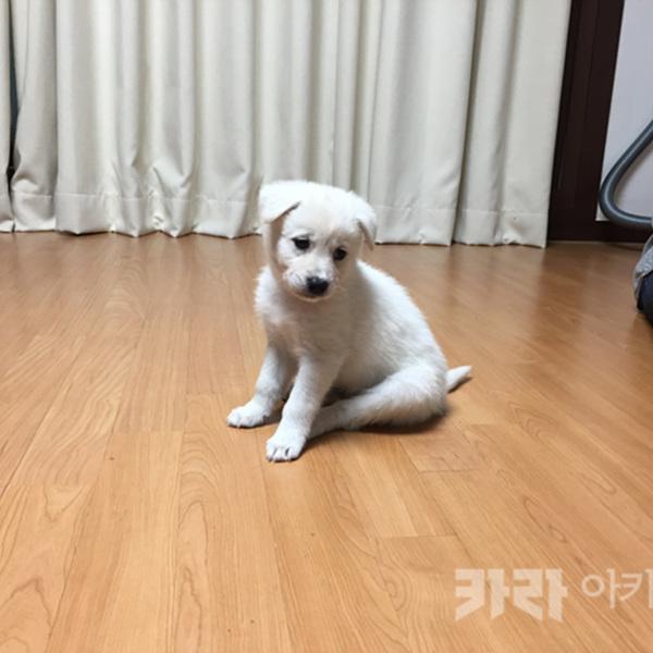 (입양후기-개) 고종숙씨믹스애기 [사진그림류]