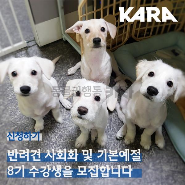 [카드뉴스] 반려견 사회화 홍보 [사진그림류]