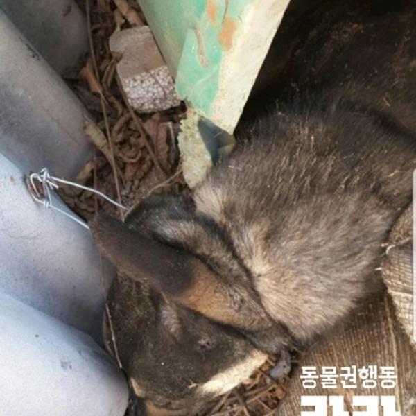 [2019.02.13] 올무에 목 졸려 죽게 한 행위, 동물학대죄 고발장 제출