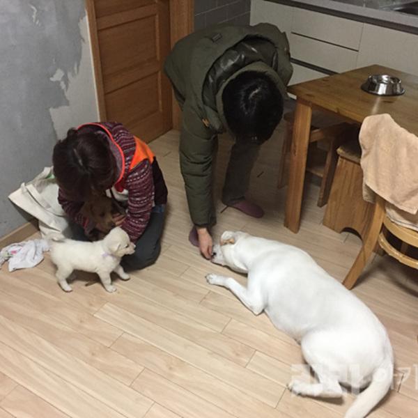 (입양후기-개) 파도 [사진그림류]