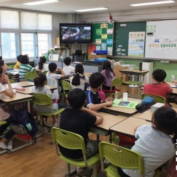 [2019.04.01] 강동구 내 초등교실 찾아가는 동물권 교육 실시
