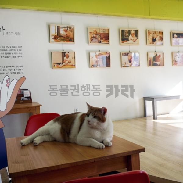 [도서관전시] 가족이니까 고양이는클수록좋다 [사진그림류]