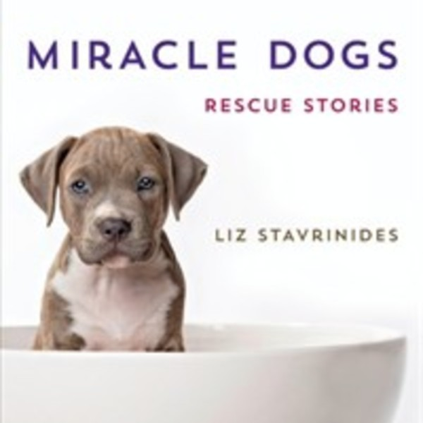 Miracle Dogs : Rescue Stories [동물도서]