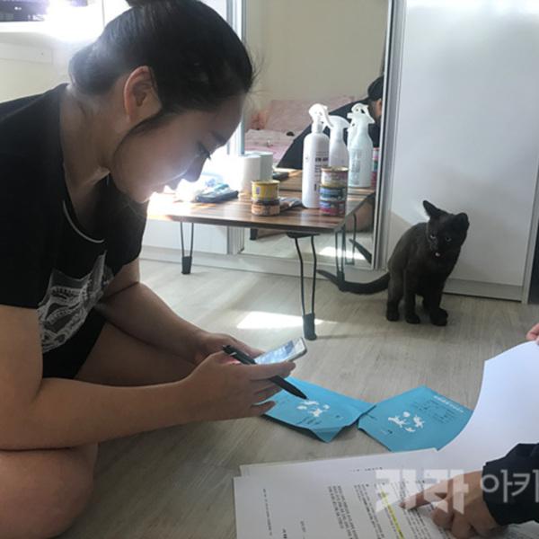 (입양후기-고양이) 블리 [사진그림류]